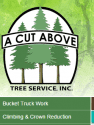A Cut Above Tree Service reviews and complaints