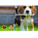 Beaglepuppyshop Com reviews and complaints