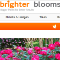 Brighter Blooms Nursery