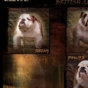 British Gladiator Bulldogs