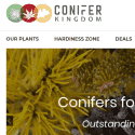 Conifer Kingdom
