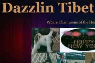 Dazzlin Tibetan Terriers reviews and complaints