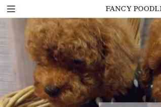 Fancy Poodles reviews and complaints