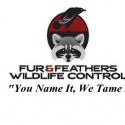 Fur And Feathers Wildlife Control