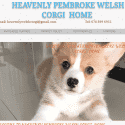 Heaven Pembroke Welsh Corgi