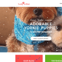 Lucky Yorkie Puppies reviews and complaints