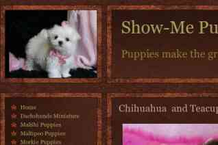 Show Mepuppies reviews and complaints