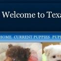 Texas Teacup Puppy