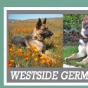 Westside German Shepherd Rescue reviews and complaints