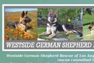 Westside German Shepherd Rescue reviews and complaints