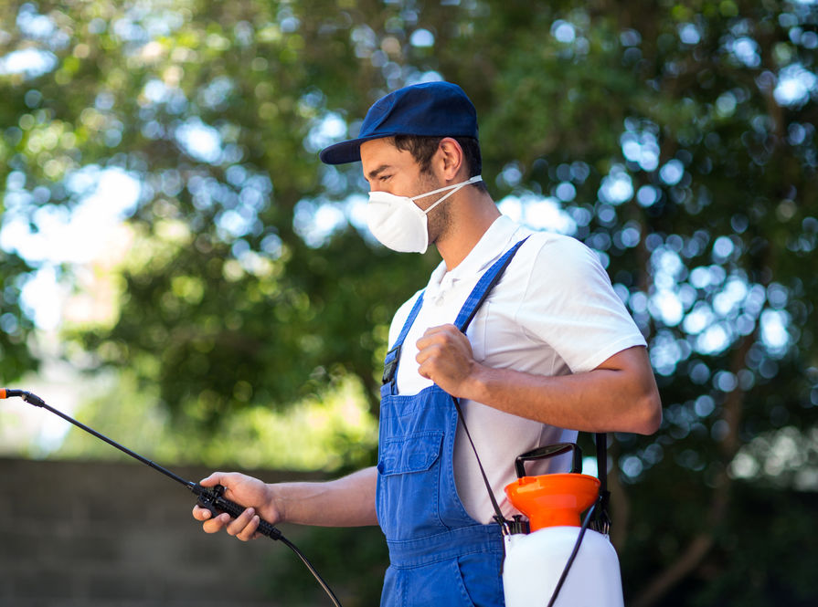Pest Control and Services