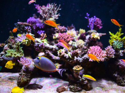 Reviews for Aquarium Fishes