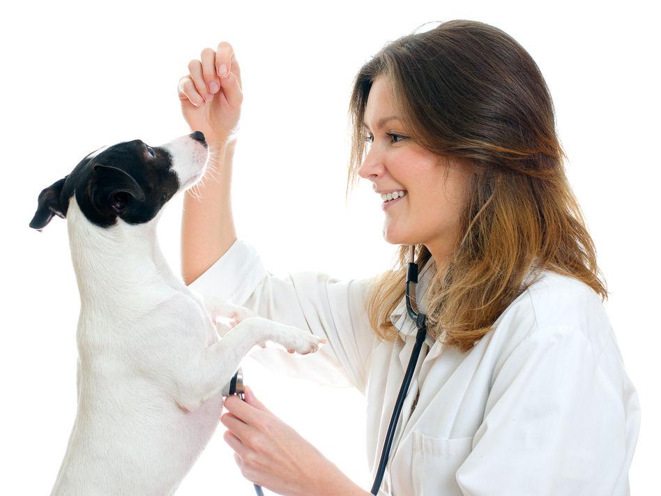 Animal Control Services