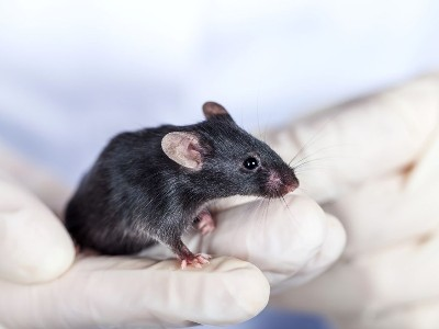 Animal Dna Testing