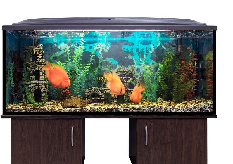 Reviews for Aquarium Stands