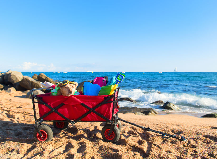 Reviews for Beach Carts