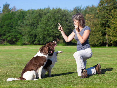 Reviews for Dog Trainers