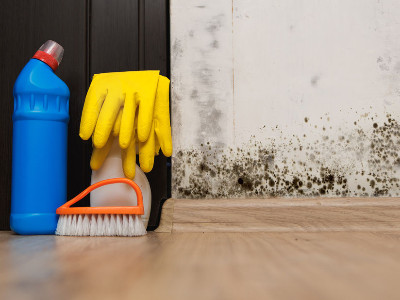 Reviews for Mold Removal Services