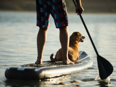 Reviews for Paddle Boards