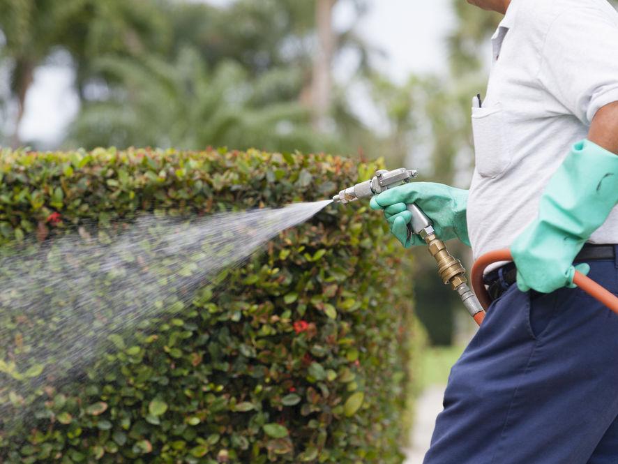 Reviews for Pest Control Technicians