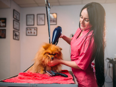 Reviews for Pet Groomers