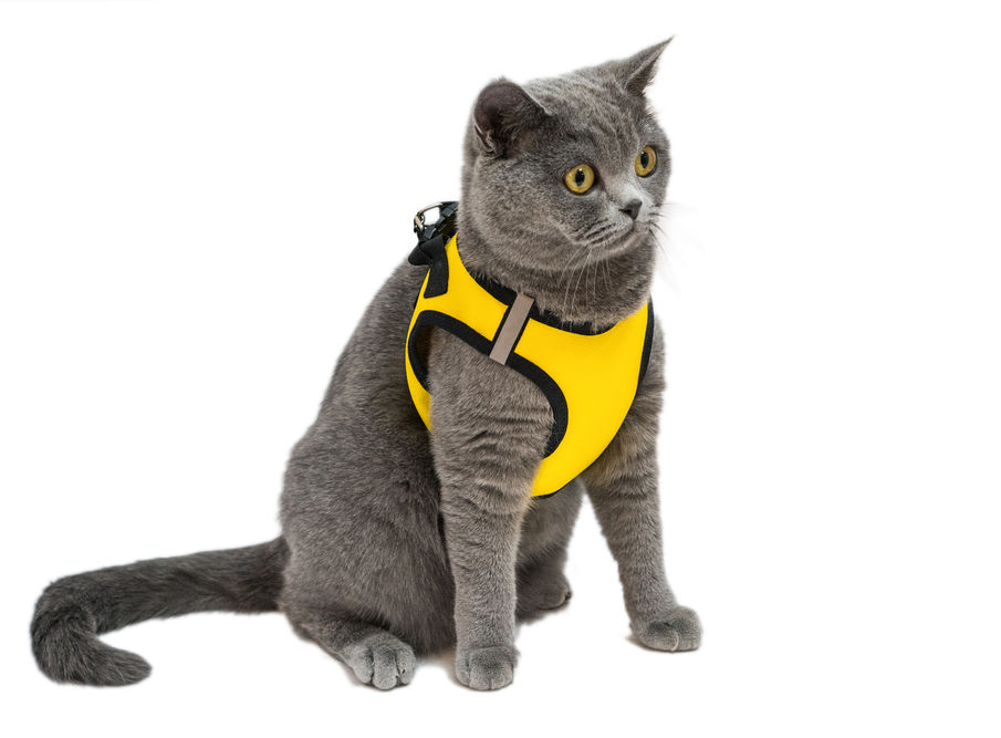 Reviews for Pet Harnesses