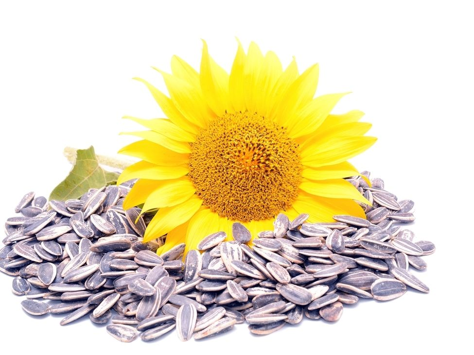 Reviews for Sunflower Seeds