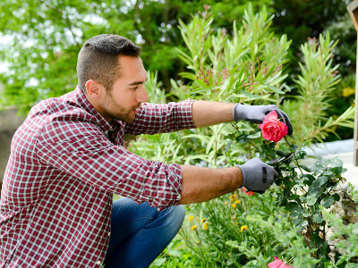 Reviews for Tree And Shrub Care