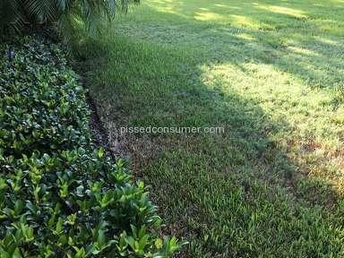 Trugreen Lawn Service review 230248