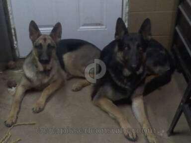 North Lexington Veterinary Clinic Pet Medicine and Veterinary Clinics review 30287