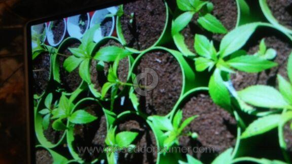 Anthurium Seeds