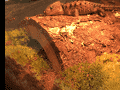 Imperial Reptiles And Exotics - Dead animal