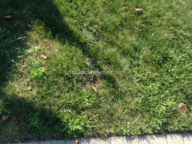Trugreen Lawn Service review 225128