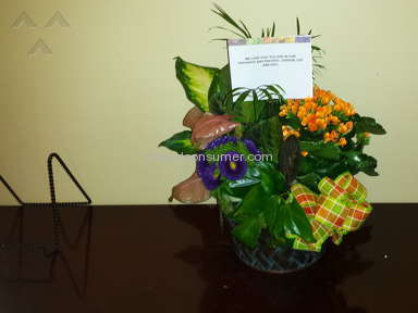 Wesley Berry Flowers Givens Plant Basket Arrangement review 132637
