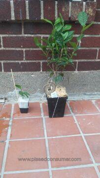Wayside Gardens Plant