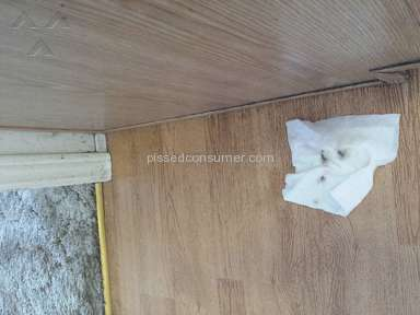 Molly Maid House Cleaning Service review 165022