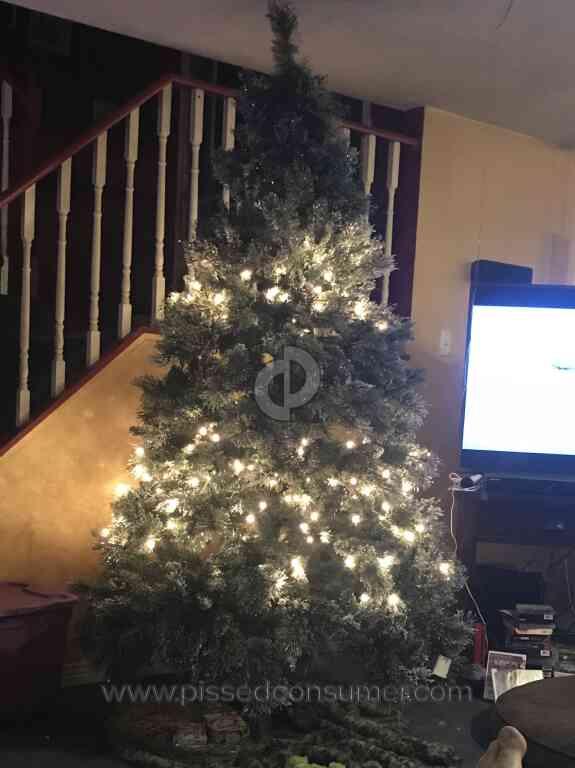 home depot fresh cut christmas trees photo album christmas tree