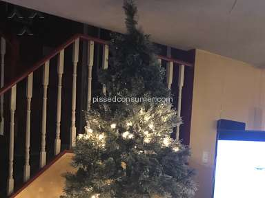 Martha Stewart Living - Martha Stewart's prelim Christmas trees from home depot