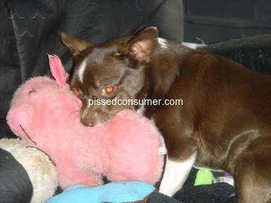 Petsmart Purina One Dog Food review 387696