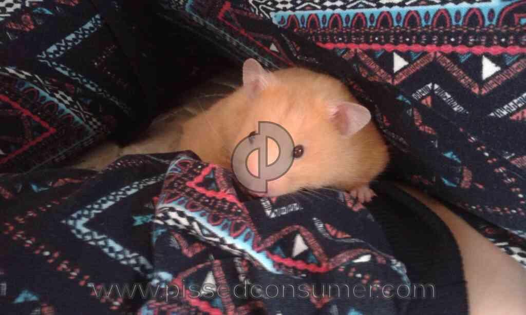 Long Haired Hamster Petsmart 106