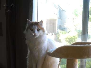 KitNipBox Pet Stores review 85141