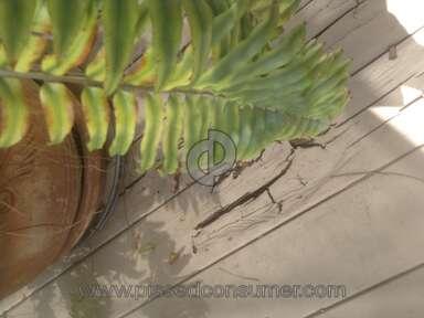 Behr Deckover Deck Paint review 137537