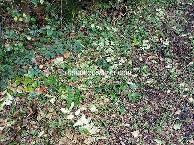 Jax 1 Lawn Care Landscaping and Gardening review 336654