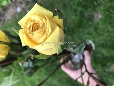 From You Flowers Roses Flowers review 204418