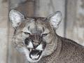 North American Hunting Club - NAHC not honoring life membership anymore