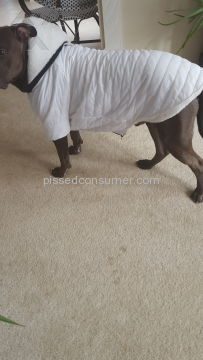 Pridebites Pet Clothing