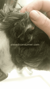 Petsmart Dog Grooming Service