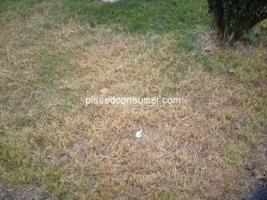 TruGreen Lawn Service review 329764