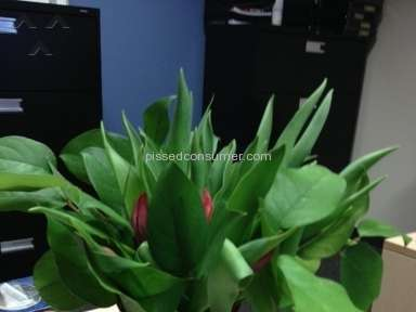 Proflowers Bouquet review 11061