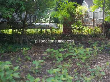 Petersons Property Maintenance Tree Removal review 328466